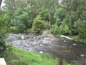 Let's start at the very beginning - Warburton River Walking Tracks